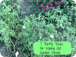 Thrifty Weed Removal Tips