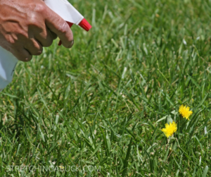 Thrifty Tricks for Wiping Out Lawn & Garden Weeds