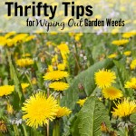 Thumbnail image for 7 Thrifty Tricks for Wiping Out Lawn & Garden Weeds