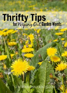 thrifty frugal killing weeds