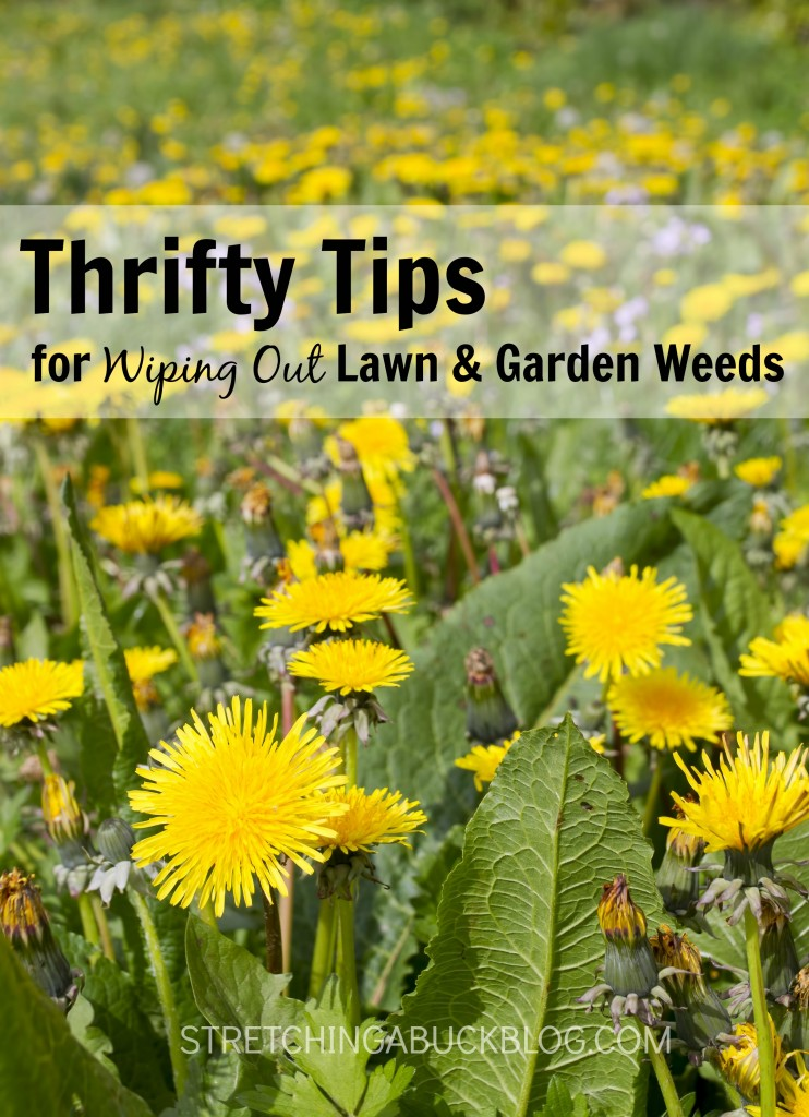 Thrifty Tricks for Wiping Out Garden Weeds