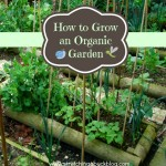 Thumbnail image for How to Grow an Organic Garden