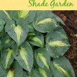 Thumbnail image for Great Plants for a Shade Garden