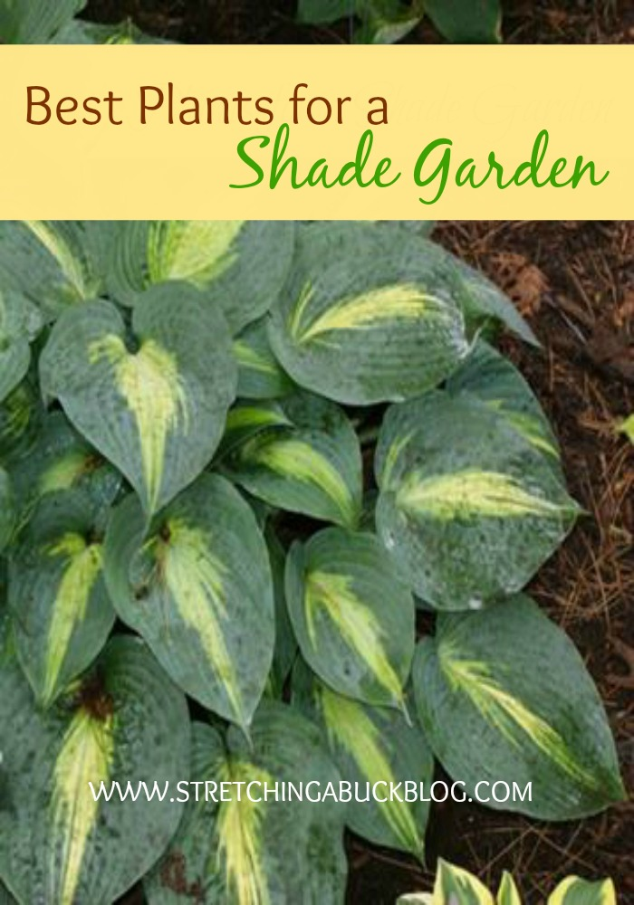 Great Plants for a Shade Garden
