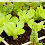 Thumbnail image for How to Build a Square Foot Garden